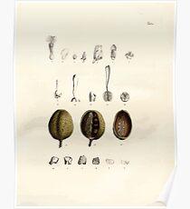 Nova genera et species plantarum V1 V3 Plates Karl Friedrich Philipp von Martius 1834 020 Poster