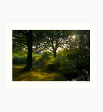 Sun through the trees Art Print