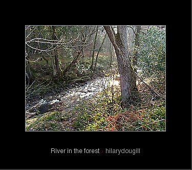 River in the forest by hilarydougill