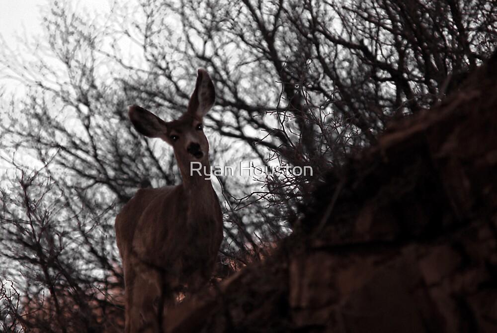 Mule Deer - Cliff Hanger by Ryan Houston