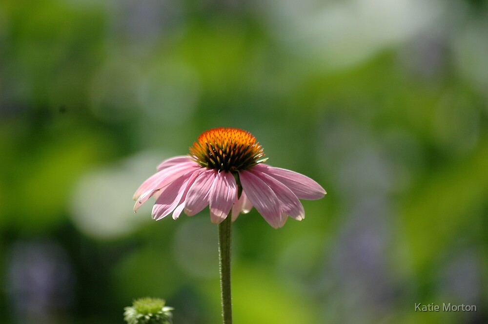 Pink Flower by Katie Morton