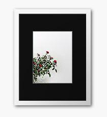 West Coast Gardens: Rambling Roses Framed Print