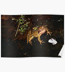 Kiss a frog into a PRINCE  Poster