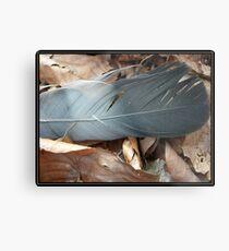 Feather Metal Print