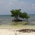 Lone Mangrove Tree by Cathy Jones