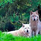 Two Arctic Wolves in the trees by Alaskandreamer