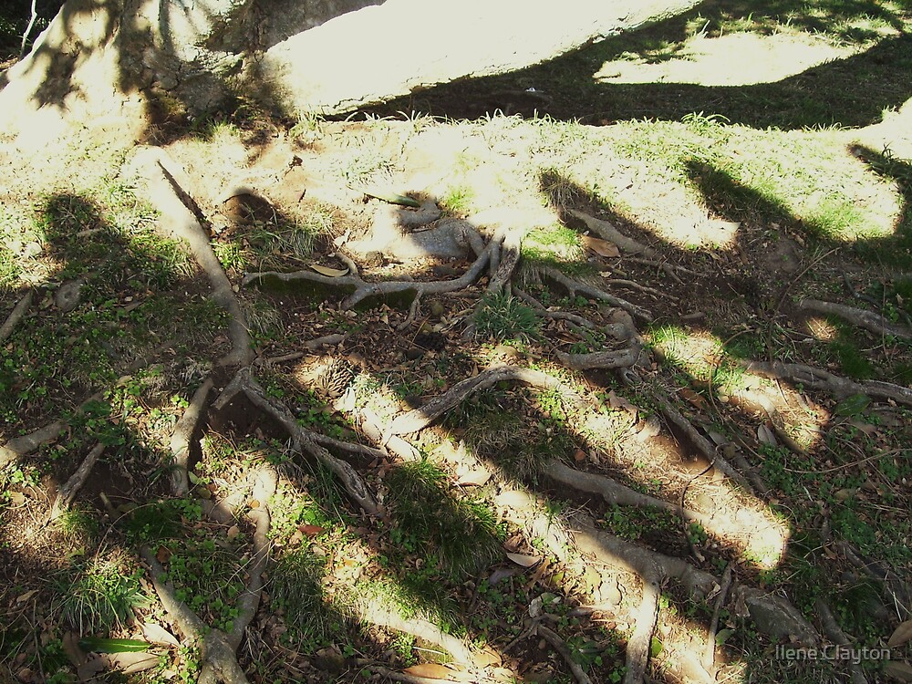 Roots and Shadows by Ilene Clayton