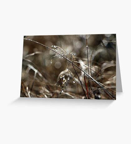 Pure Morning IV Greeting Card