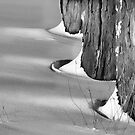 Trees in the Snow by Chet Scerra