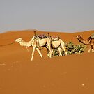 A man and his Camels  by cs-cookie