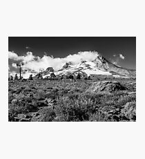Mt Hood and lupines from Pacific Crest Trail monochrome Photographic Print