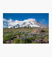 Mt Hood and lupines from Pacific Crest Trail painterly Photographic Print