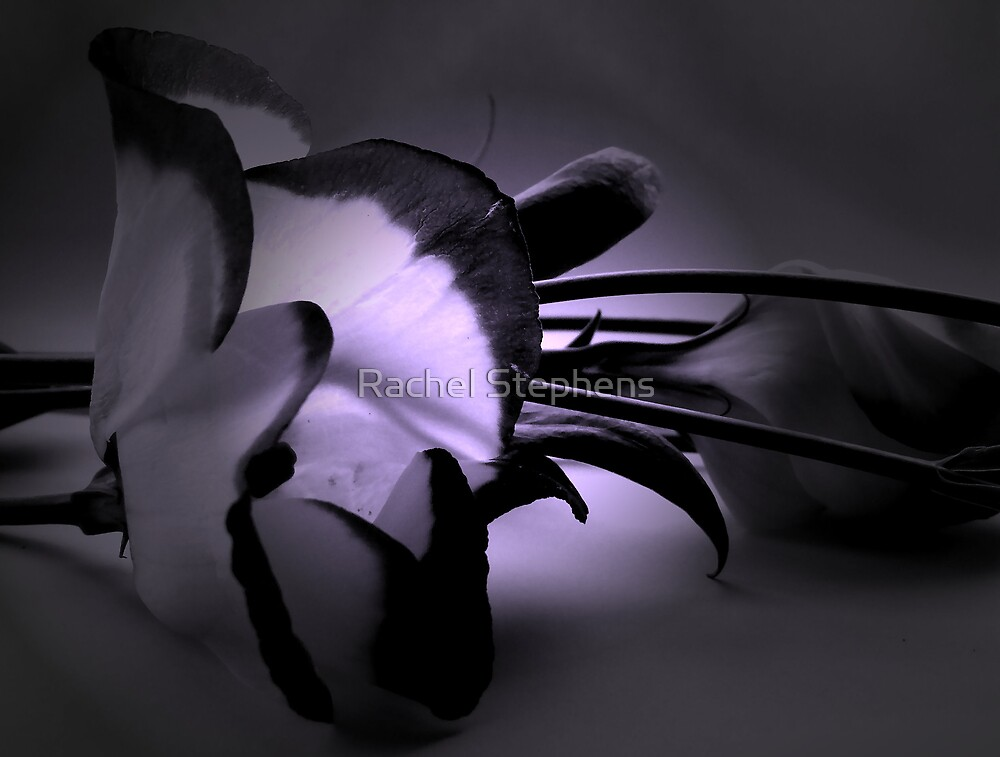 Flower 2 by Rachel Stephens