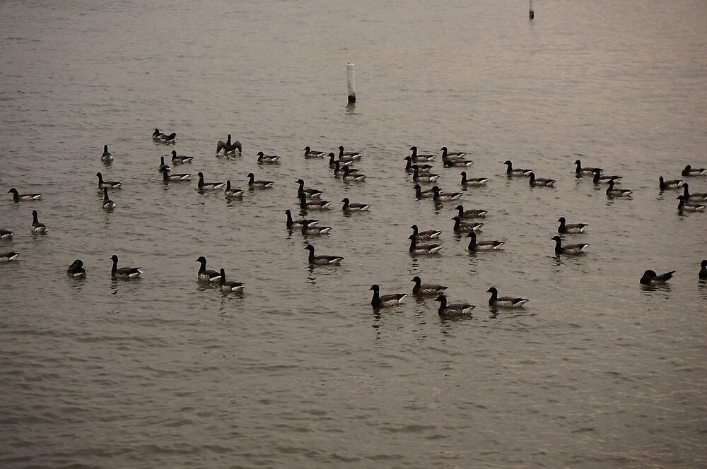 Beautiful View of Ducks on a River by rawrryeol