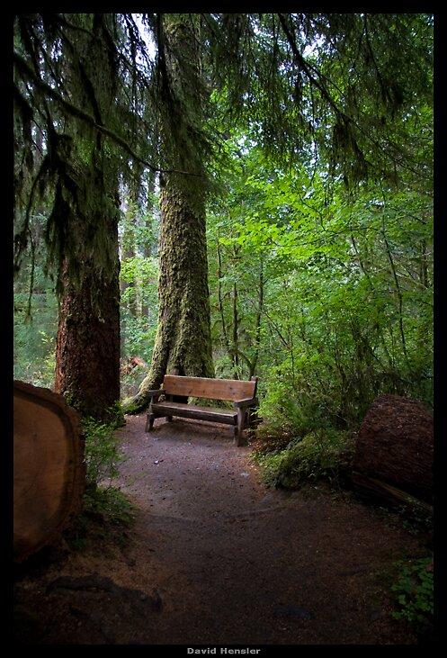Hoh Rain Forest by Hensler