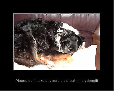 Please don't take anymore pictures! by hilarydougill