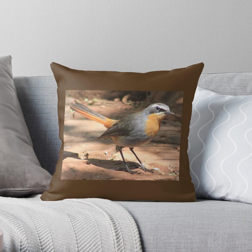 Cape Robin giving me the eye Throw Pillow