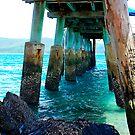 Support - Daydream Island, Whitsunday Islands, Queensland Australia by Philip Johnson