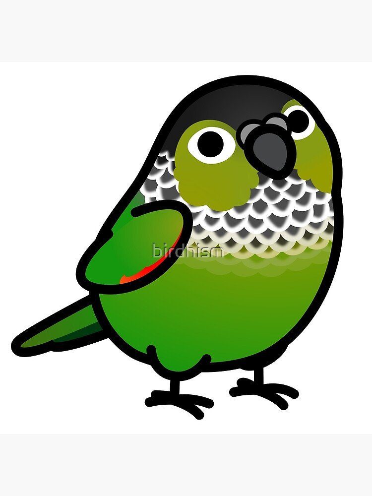 Chubby Black Capped Conure Greeting Card By Birdhism Redbubble,Eggplant Chinese Recipe Szechuan
