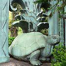 Bronx Turtle by David Thompson