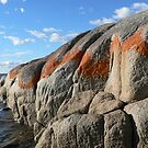 Bay of Fires by David Thompson