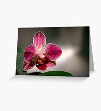 The Light Fantastic Greeting Card