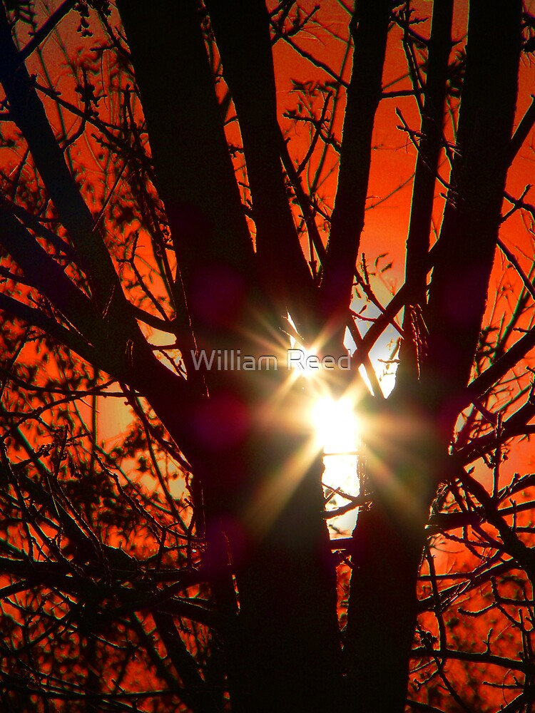 Double Sun by William Reed