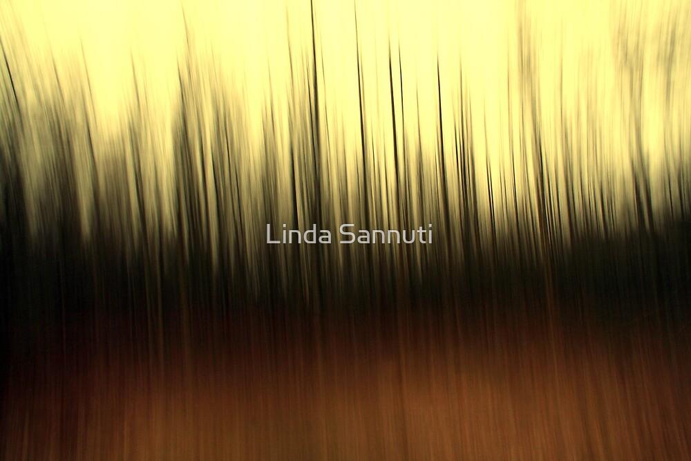 Blurred Visions by Linda Sannuti
