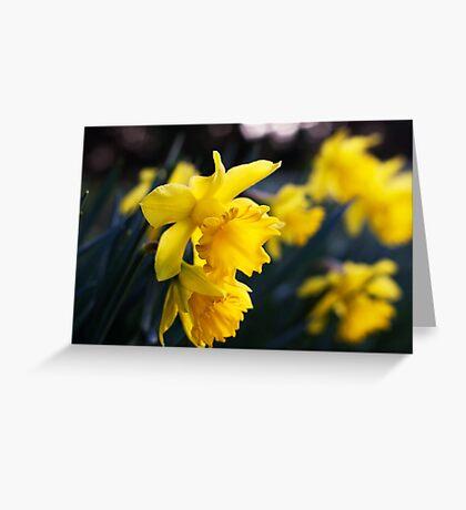 Daffodil Day Greeting Card
