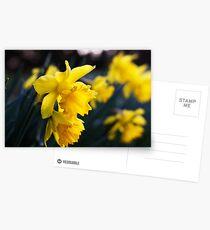 Daffodil Day Postcards