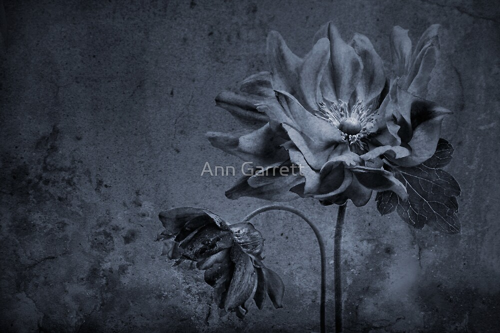 Moody Anemones by Ann Garrett