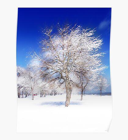 snow tree Poster