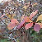 subtle tones of autumn by jayview