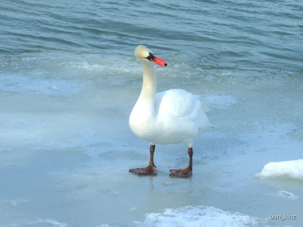 Swan by bunykinz