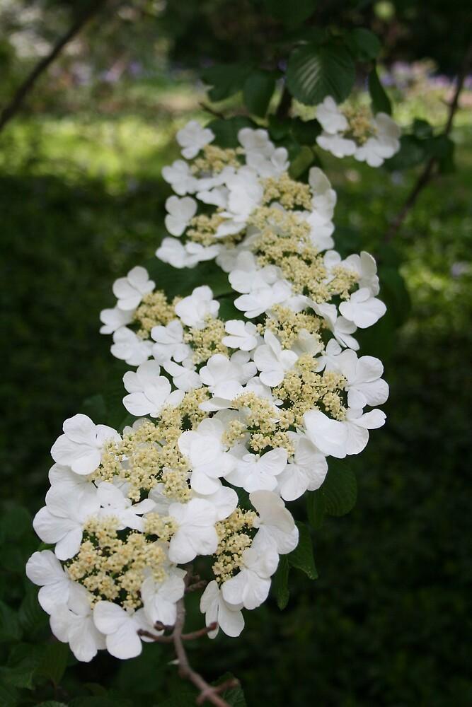 white blossom by jamielr