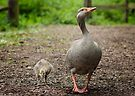 Goose and her Gosling by Sara Sadler