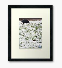 EJK - Snow Crow Framed Print
