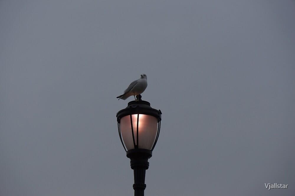 The Lone Gull by Vjallstar