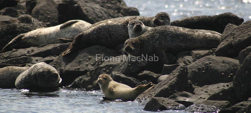Relaxation by Fiona MacNab