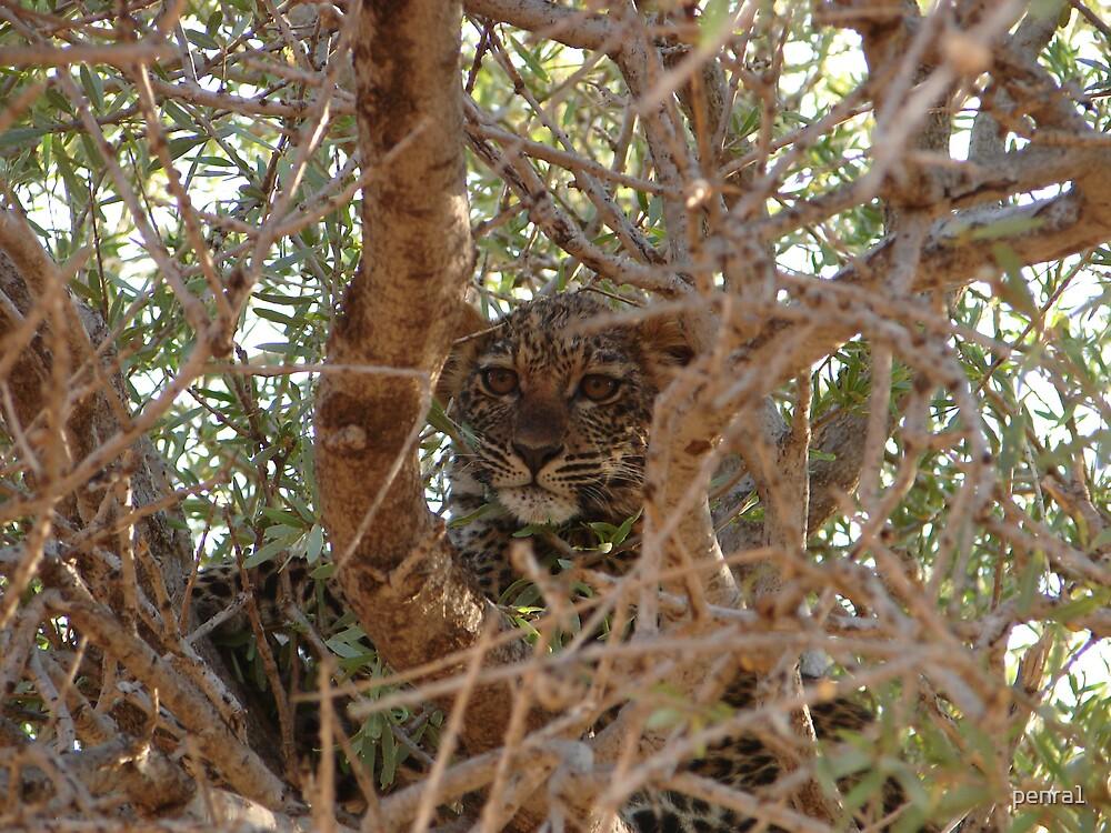 Leopard Cub by penra1