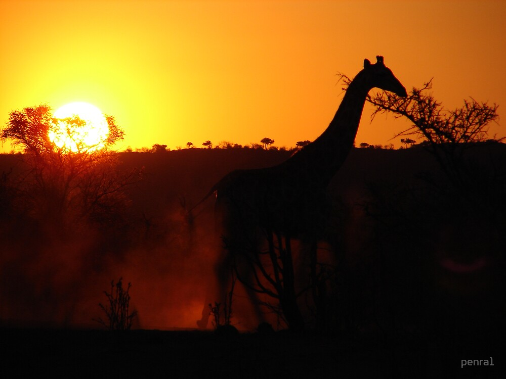 Giraffe at Sunset by penra1