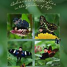 Babies Are Butterflies in the Garden of Life by Deanna Roy