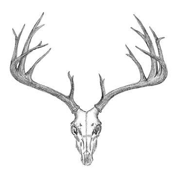 Kilmallie Trails - Deer Skull by fkmmck
