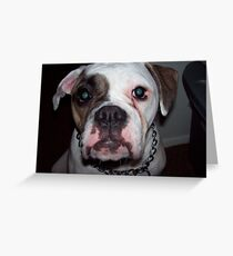 bullie Greeting Card