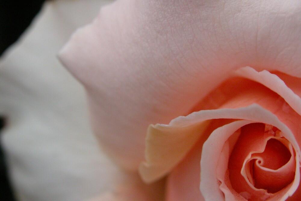 Pink Bud Unfurled by Linda Sass
