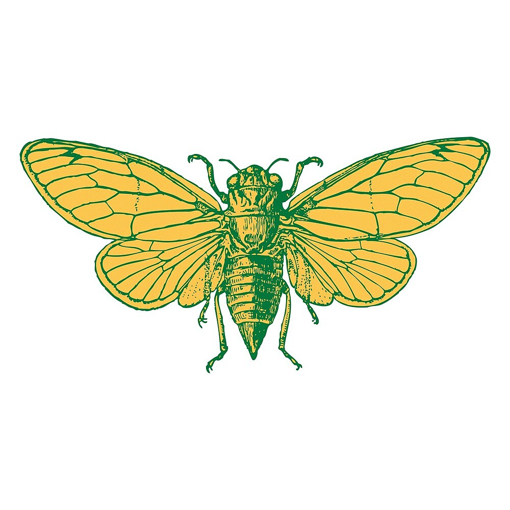 Cicada by Thomas Terceira