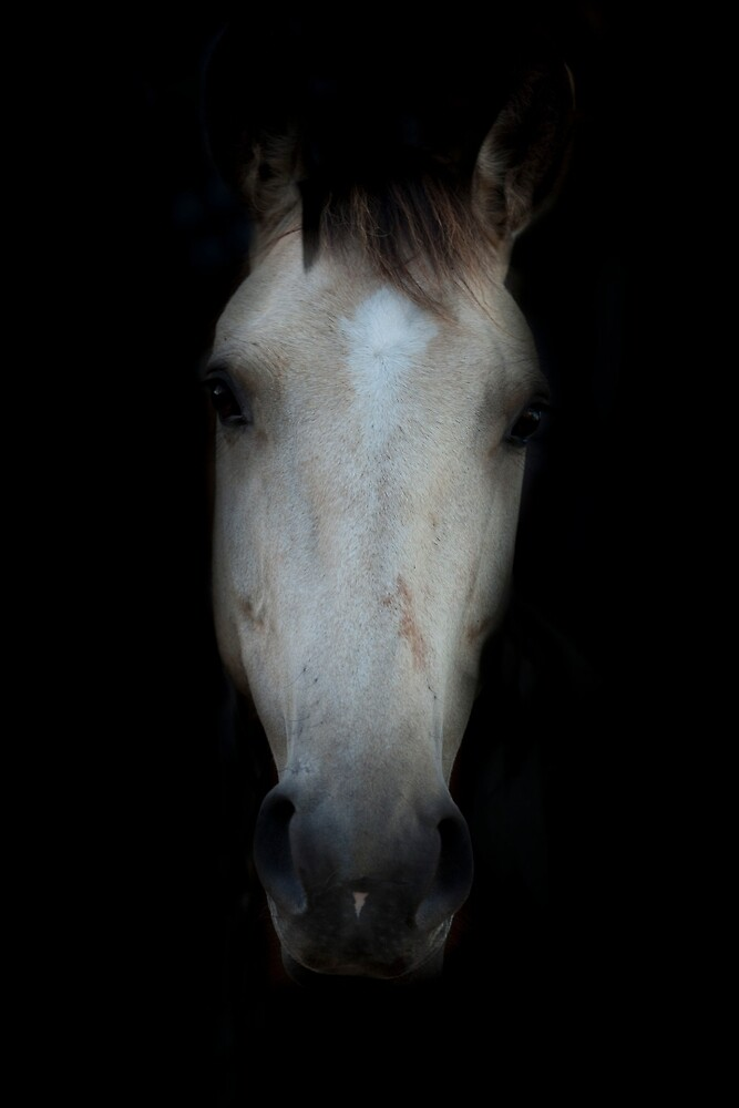 Through the darkness, horse portrait by ESPphotography