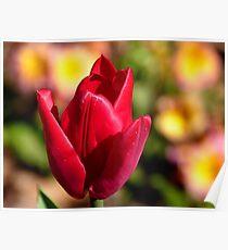 Indulgence - Red Tulip -NZ Poster