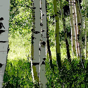 Aspen Forest by curlybit