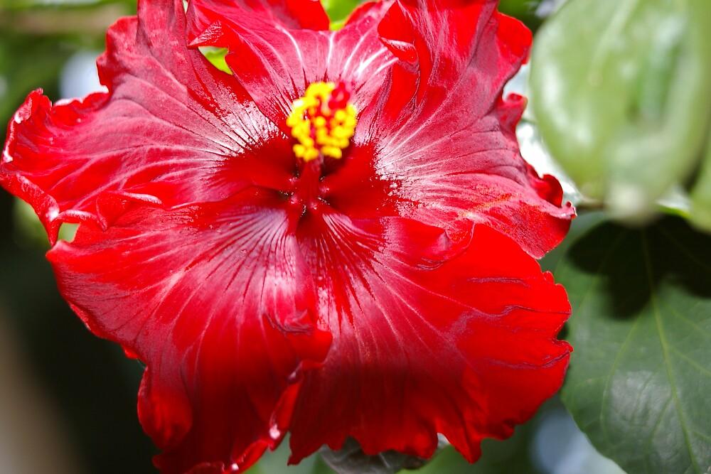The warmest red by Deidre Cripwell